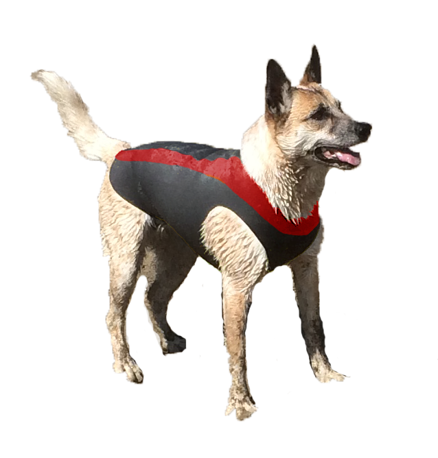 cdbbdb66e984e Doggie Wetsuits are perfect for your water loving pets. They keep your Dog  warm and provide positive Buoyancy* Wetsuits are suitable for dogs that:  Surf, ...